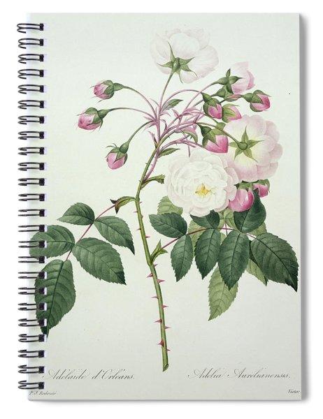 Adelia Aurelianensis Spiral Notebook
