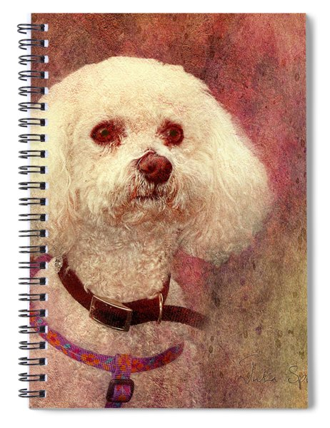 Adoration - Portrait Of A Bichon Frise  Spiral Notebook