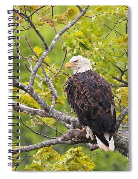 Adult Bald Eagle Spiral Notebook