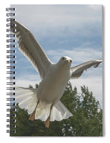 Adult Seagull In Flight Spiral Notebook