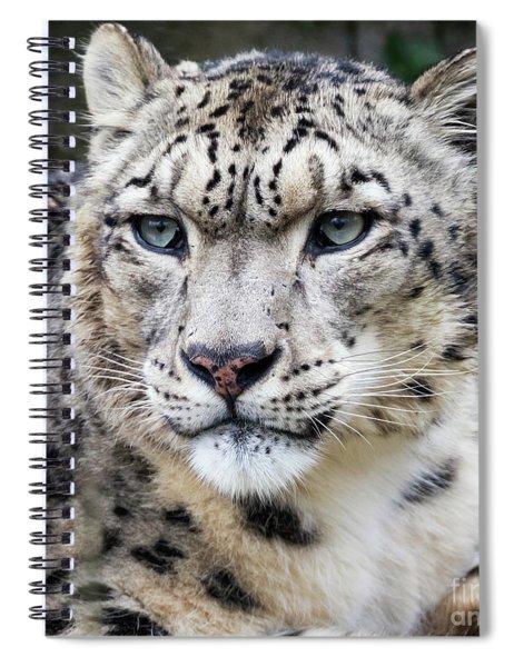 Adult Snow Leopard Portrait Spiral Notebook