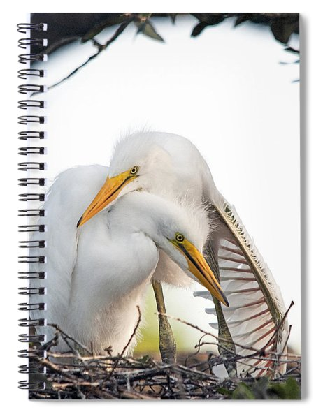 Affectionate Chicks Spiral Notebook