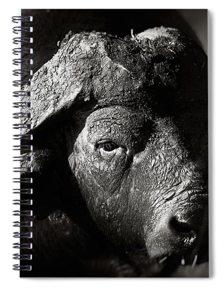 African Buffalo Bull Close-up Spiral Notebook