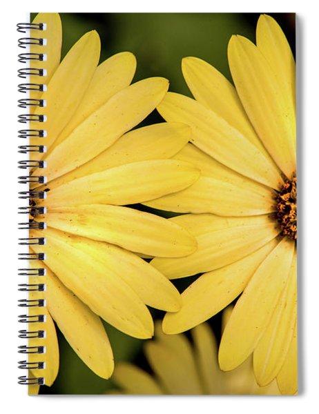 African Daisy-twice Spiral Notebook