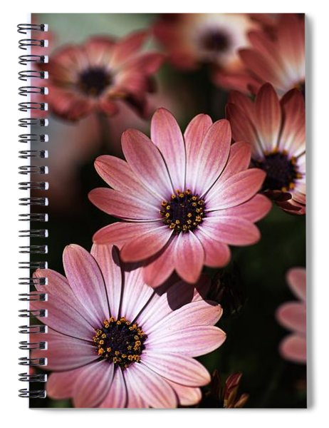 African Daisy Zion Red Spiral Notebook