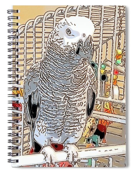 African Grey Parrot In Pencil Spiral Notebook