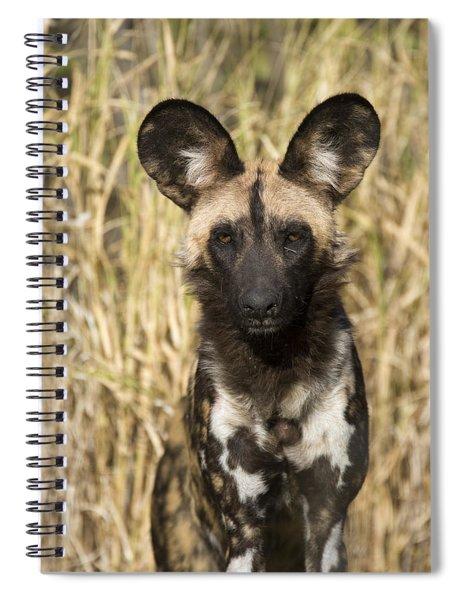 African Wild Dog Okavango Delta Botswana Spiral Notebook