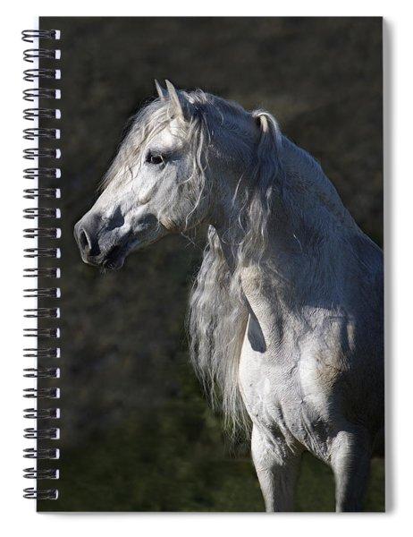 Alejandro Spiral Notebook