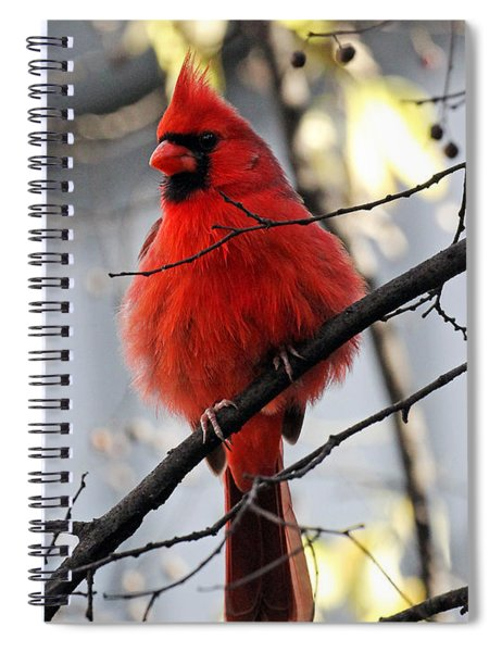 All Fluff Spiral Notebook