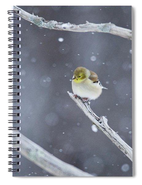 All Fluffy Spiral Notebook