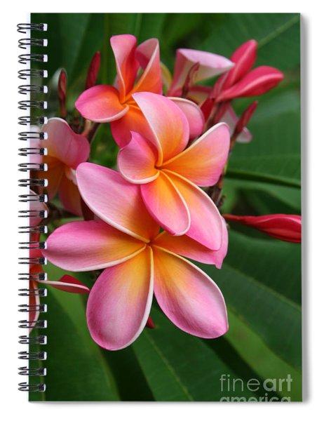 Aloha Lei Pua Melia Keanae Spiral Notebook