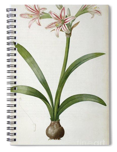 Amaryllis Vittata Spiral Notebook