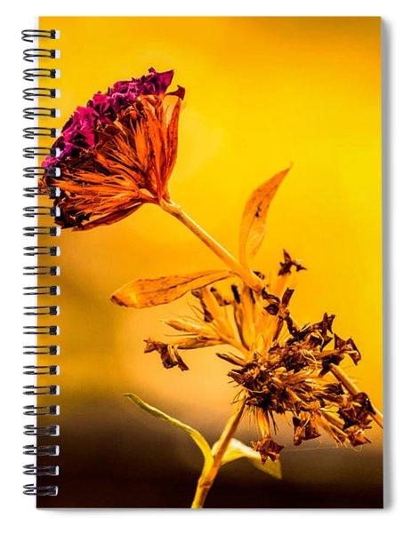 Amazon Cherry Spiral Notebook