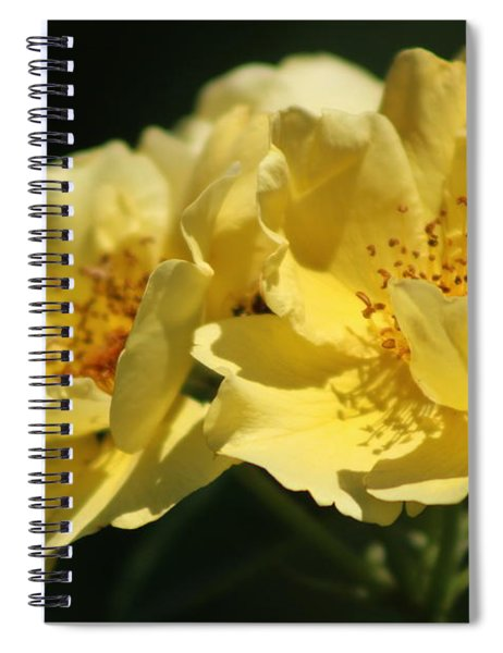 Amber Yellow Country Rose Spiral Notebook