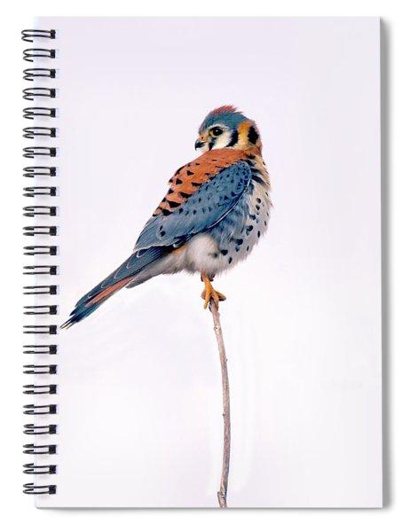 Amercian Kestrel Spiral Notebook