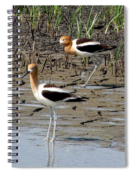 American Avocets Spiral Notebook