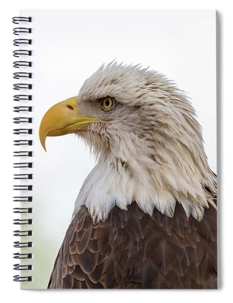 American Bald Eagle Closeup Copy Space Spiral Notebook