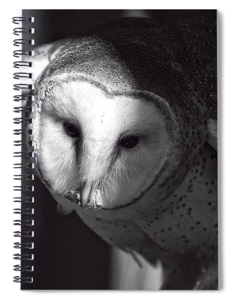 American Barn Owl Monochrome Spiral Notebook