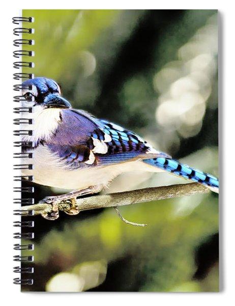 American Blue Jay On Alert Spiral Notebook