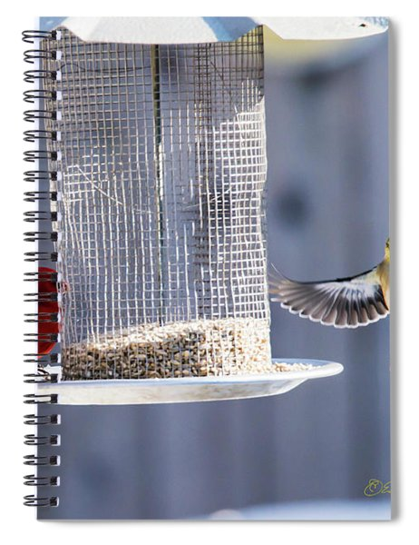 Spiral Notebook featuring the photograph American Goldfinch Inbound by Edward Peterson