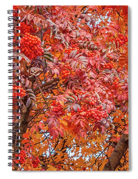 American Mountain Ash In Autumn Spiral Notebook