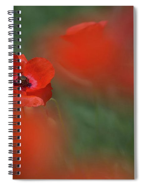 Amongst The Red Spiral Notebook