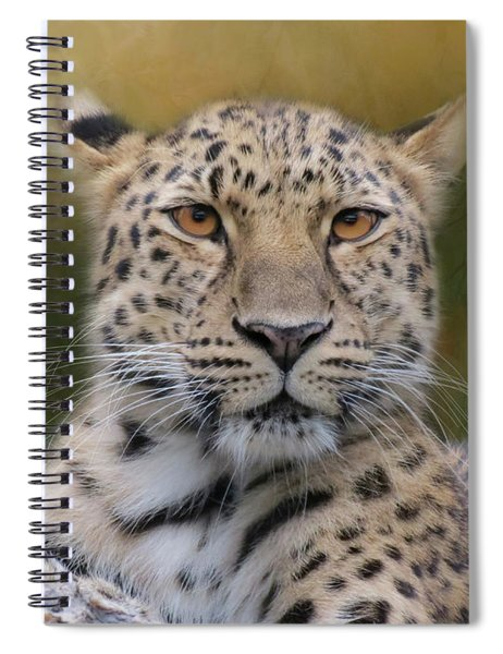 Spiral Notebook featuring the photograph Amur Leopard by Patti Deters