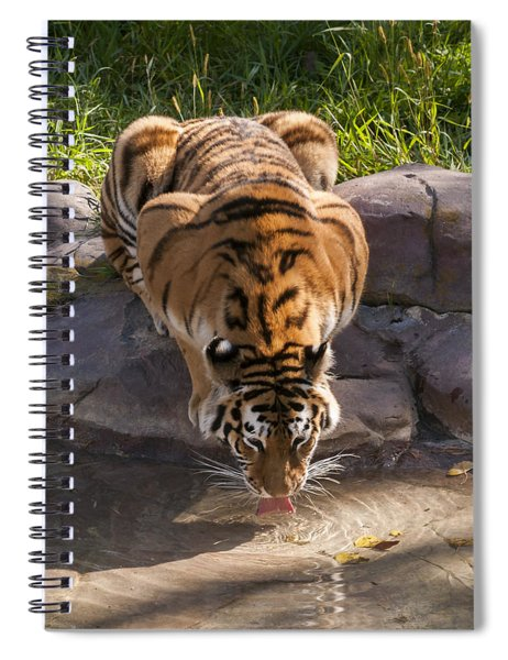 Amur Tiger Drinking Spiral Notebook