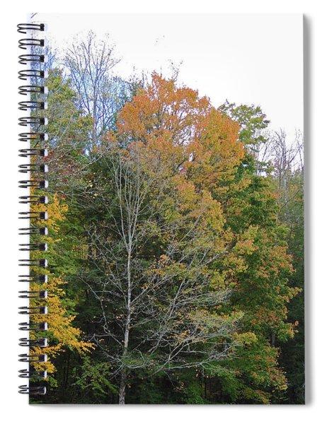 An Autumn Grove Of Trees Spiral Notebook