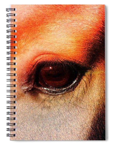 An Equine Sunset Spiral Notebook