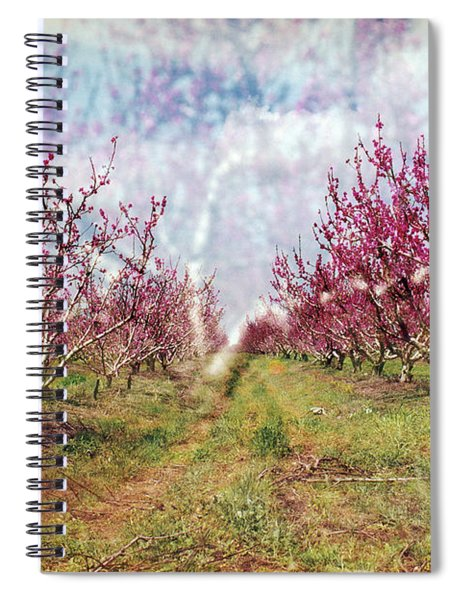 An Orchard In Blossom In The Golan Heights Spiral Notebook