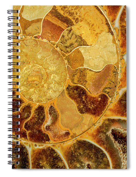 Ancient Ammonite Spiral Notebook