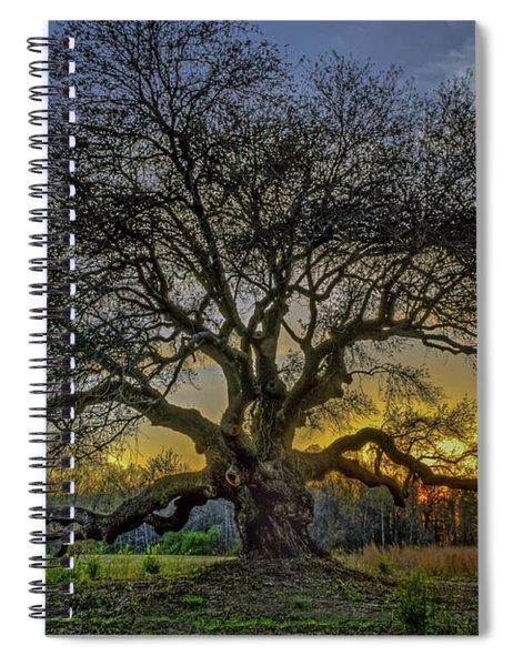 Ancient Live Oak Tree Spiral Notebook