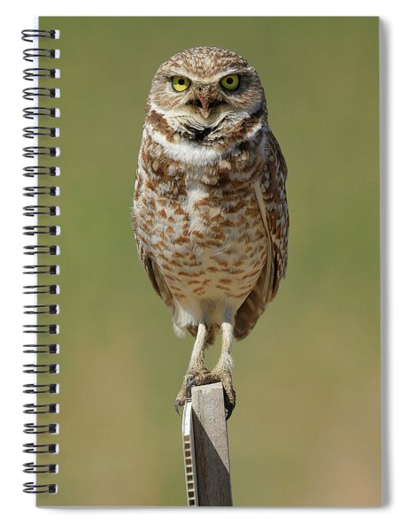 Angry Perch Spiral Notebook