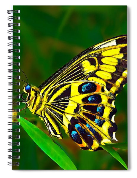 Anise Swallowtail Butterfly Spiral Notebook