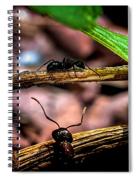 Ants Adventure Spiral Notebook
