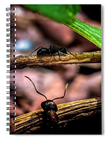 Ants Adventure Spiral Notebook