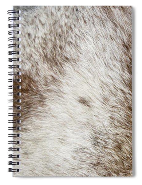 Appaloosa 2 Spiral Notebook