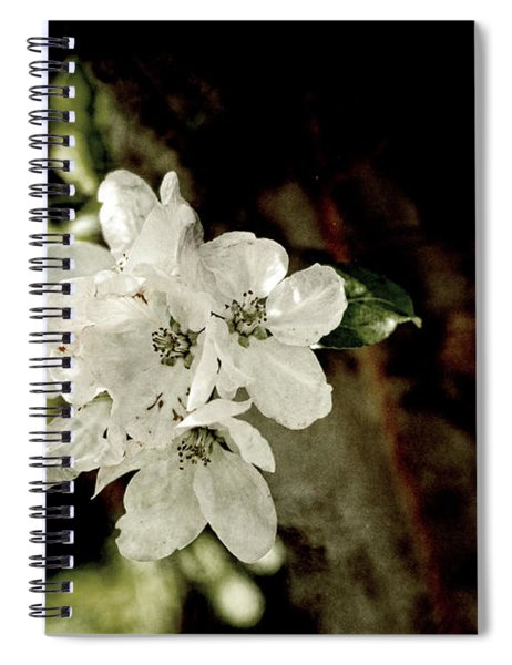 Apple Blossom Paper Spiral Notebook