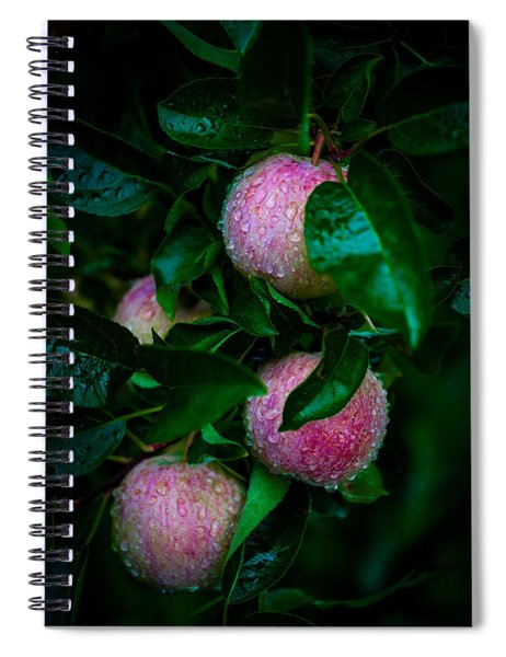 Apples After The Rain Spiral Notebook