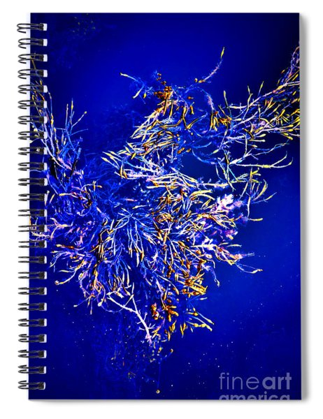 Aquatic Melody Spiral Notebook