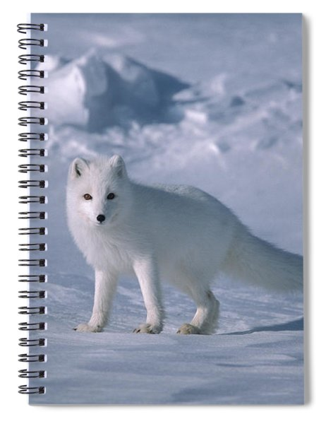 Arctic Fox On The North Slope Spiral Notebook