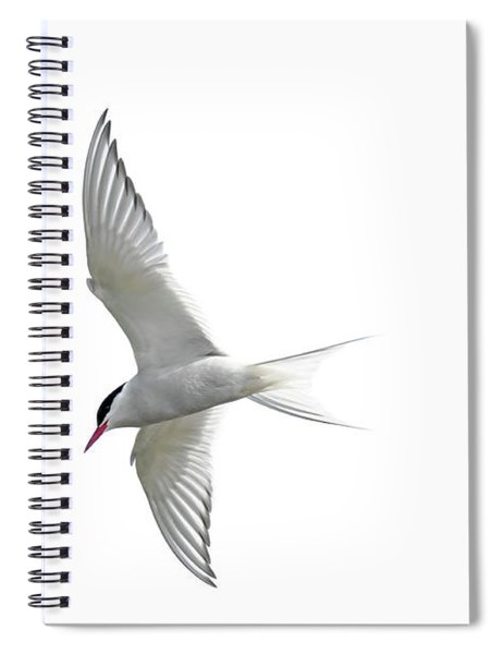 Arctic Tern Flying In Mist Spiral Notebook