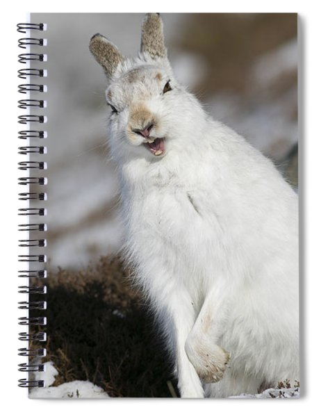 Are You Kidding? - Mountain Hare #14 Spiral Notebook