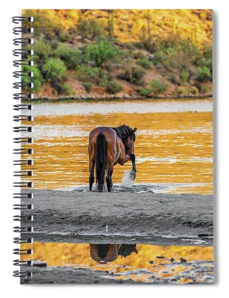 Arizona Wild Horse Playing In Water Spiral Notebook