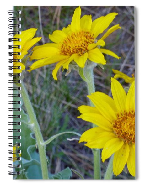 Arrowleaf Balsamroot Flower Spiral Notebook