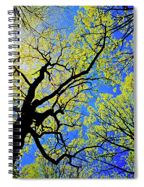 Artsy Tree Canopy Series, Early Spring - # 02 Spiral Notebook