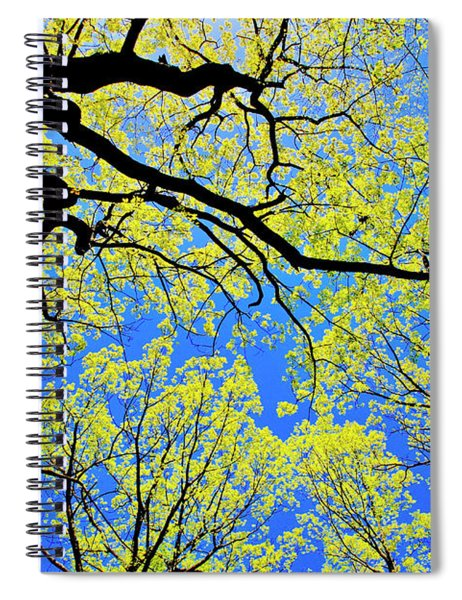 Artsy Tree Canopy Series, Early Spring - # 03 Spiral Notebook