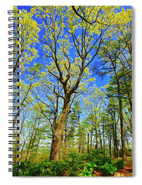 Artsy Tree Series, Early Spring - # 04 Spiral Notebook