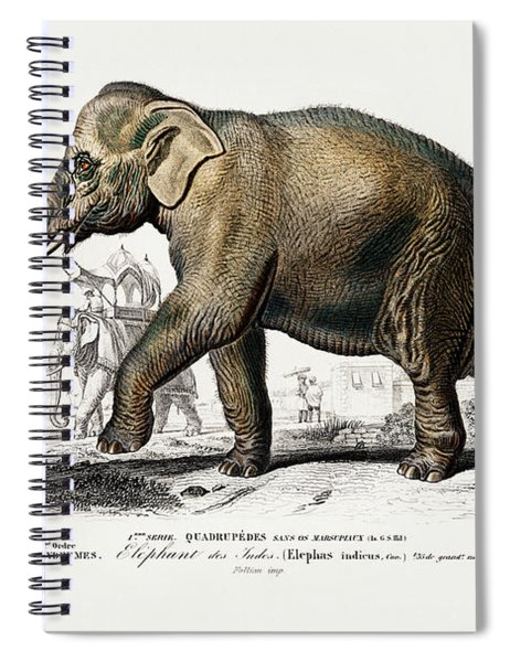 Asiatic Elephant - Elephas Maximus Indicus Spiral Notebook